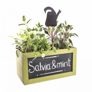 Ящик для цветов Базилик с пряными травами