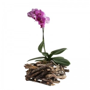 Кашпо для орхидей Крэк-Куб