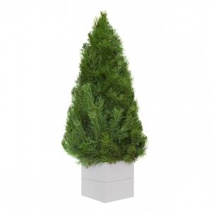 Новогодняя елка из натуральной хвои