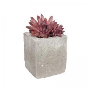 Суккулент в бетонном кашпо Детройт